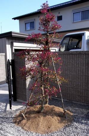 樹木の成長をたのしむ庭 【南国市 T様邸】