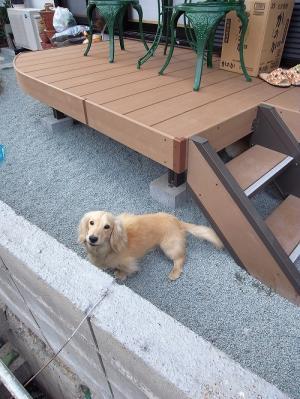 doggarden